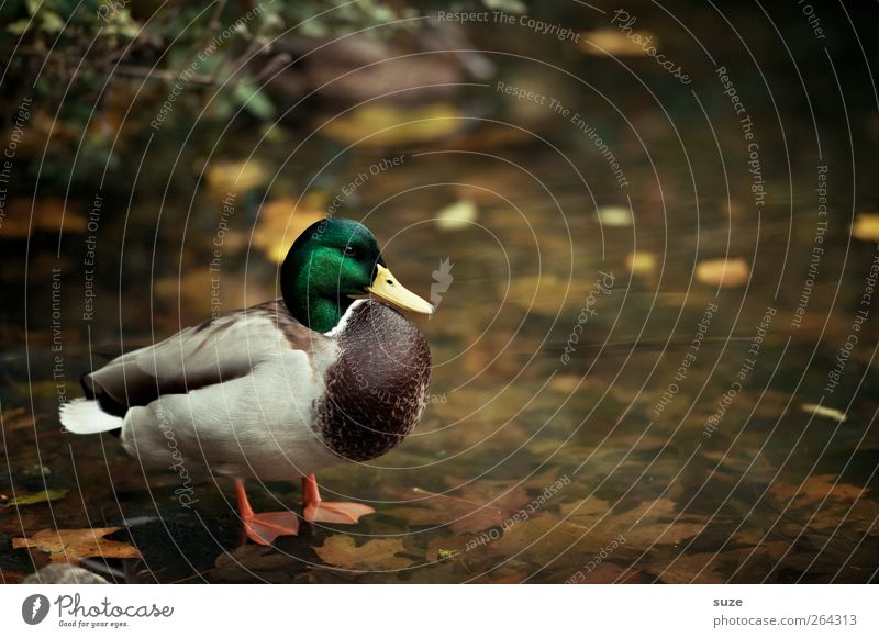 Nature Water Animal Environment Lake Bird Weather Wild animal Stand Beautiful weather Elements Lakeside Duck Animalistic Pond Surface of water