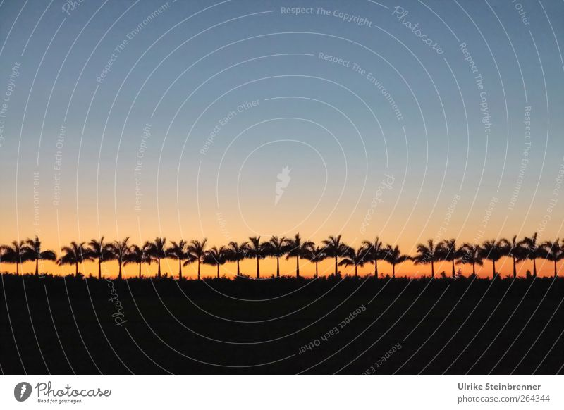 Counting palm trees Vacation & Travel Tourism Environment Nature Landscape Plant Sky Cloudless sky Night sky Horizon Sunrise Sunset Beautiful weather Tree