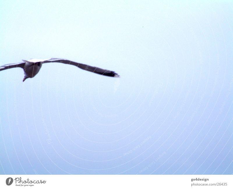 outlaw Bird Air Ocean Sky Flying seagull
