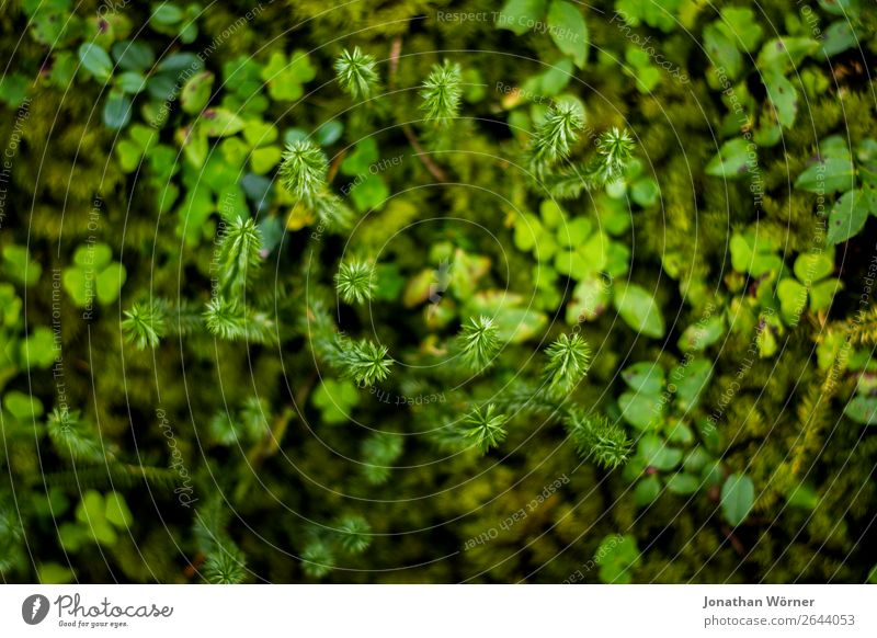 Green forest plants Trip Hiking Environment Nature Plant Earth Grass Moss Leaf Foliage plant Wild plant Forest Bog Marsh Growth Fresh Natural Colour photo