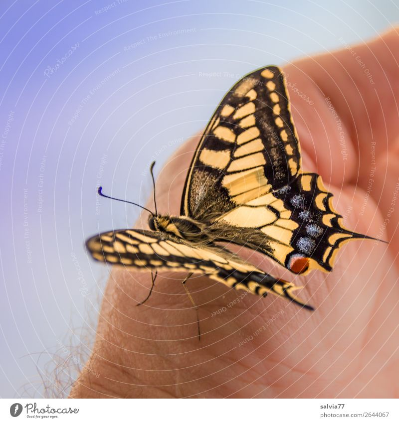 Transformation | completed Hand Nature Summer Animal Butterfly Wing Scales Feeler Insect Metamorphosis Swallowtail 1 Touch Esthetic Elegant Positive Beautiful