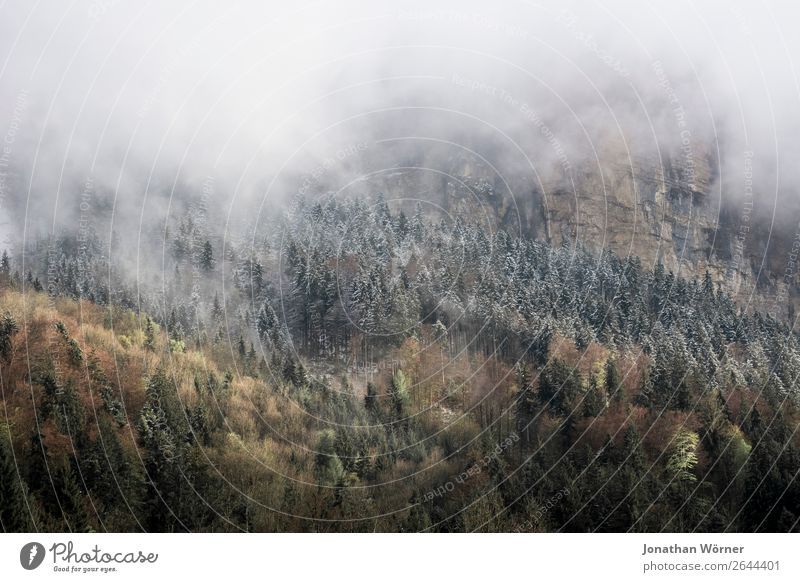 Autumn Mountains Environment Nature Landscape Plant Winter Fog Ice Frost Tree Forest Alps Freedom Leisure and hobbies Calm Colour photo Subdued colour
