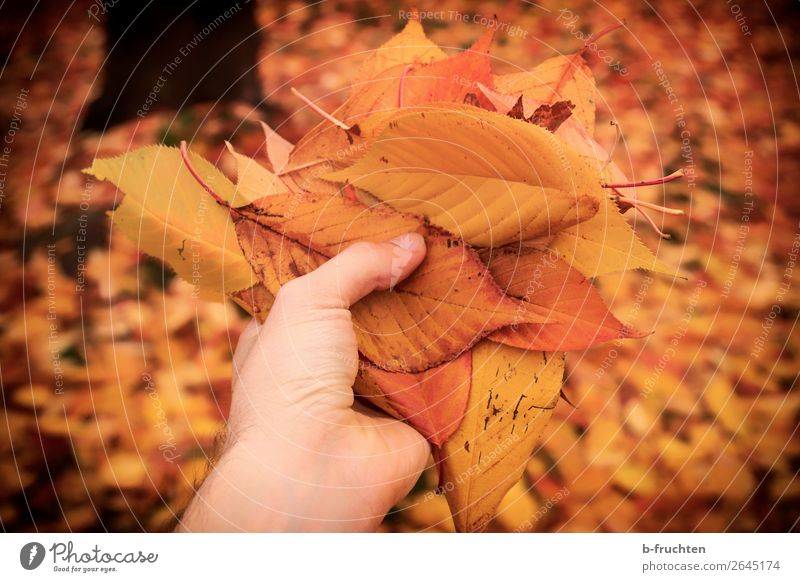 Man Hand Tree Leaf Forest Adults Autumn Religion and faith Garden Orange Leisure and hobbies Hiking Park Gold Esthetic Fingers