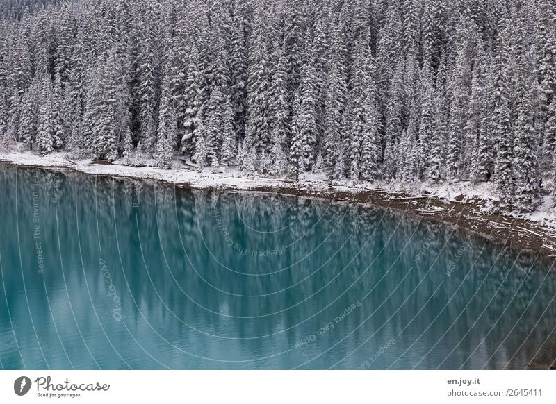 powdered Vacation & Travel Trip Expedition Winter Snow Winter vacation Nature Landscape Forest Lakeside Moraine lake Exceptional Turquoise Cold Climate Dream