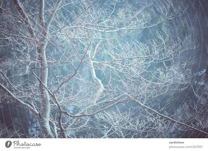 poem Nature Forest Blue Gray Esthetic Simple Elegant Tree trunk Treetop Twig Beech tree Cold Calm Colour photo Subdued colour Exterior shot Detail
