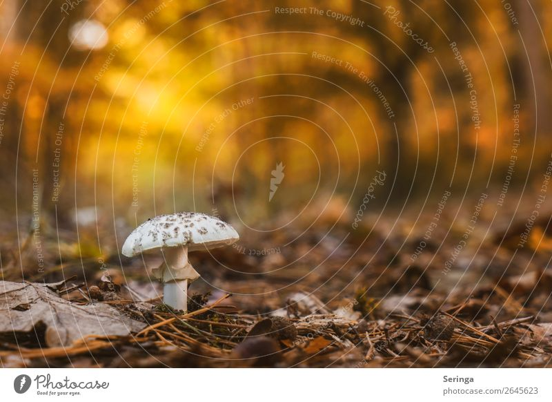 Nature Plant Landscape Animal Forest Autumn Growth Mushroom