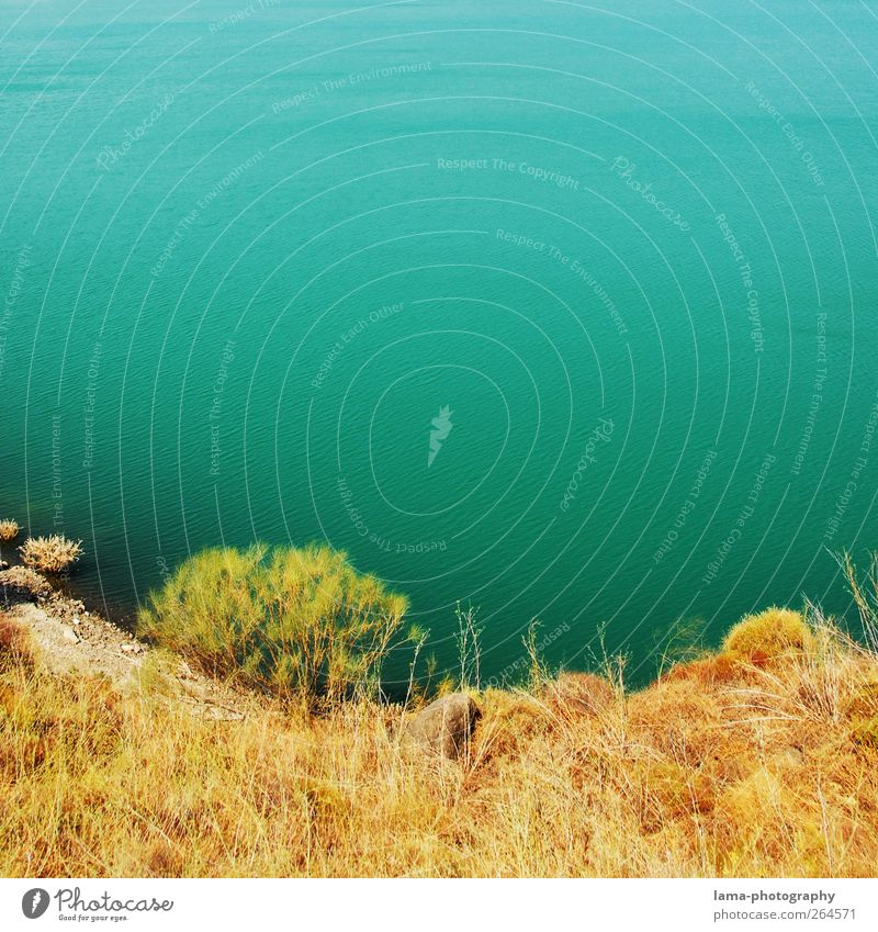 Embalse de Vinuela (abajo) [XXXIII] Summer vacation Water Grass Bushes Coast Lakeside River bank Malaga Antequera Granada Andalucia Spain Swimming & Bathing