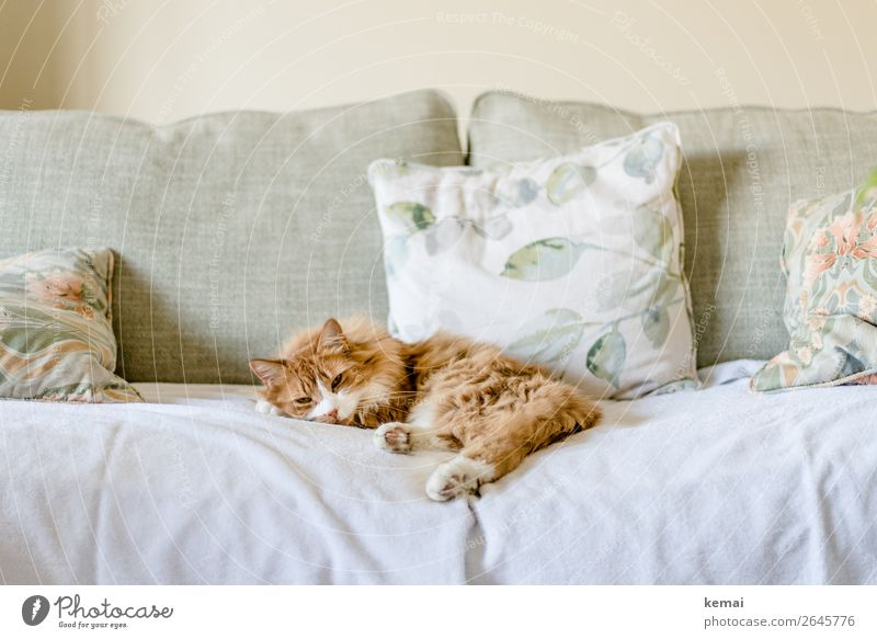 Cat Beautiful Relaxation Animal Calm Lifestyle Happy Style Living or residing Flat (apartment) Contentment Leisure and hobbies Lie Authentic Well-being