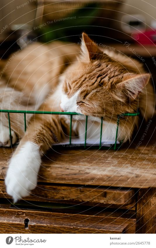 Cat in basket Lifestyle Harmonious Well-being Contentment Senses Relaxation Calm Leisure and hobbies Living or residing Flat (apartment) Office Desk Basket