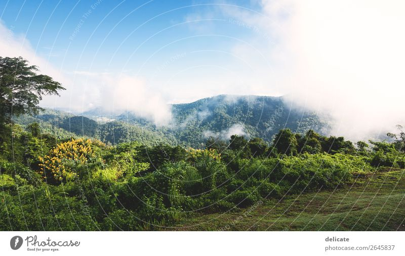 Khao Yai National Park Environment Nature Landscape Plant Animal Sky Clouds Climate Climate change Weather Beautiful weather Fog Tree Garden Forest