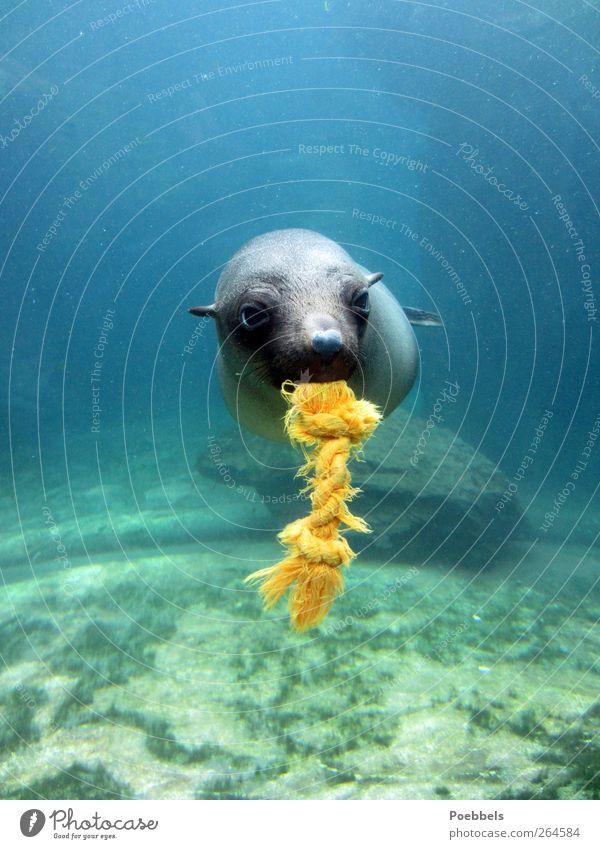 "Let's play Environment Nature Animal Water North Sea Baltic Sea Ocean Fish Animal face Zoo Aquarium ""Seal seal baby Sea lion Sea lion baby"" 1 Exceptional Fluid"