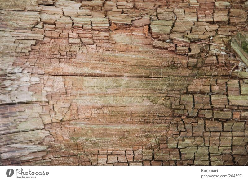Nature Old Background picture Wood Line Brown Friendship Design Idyll Transience Stripe Change Agriculture Education Wooden board Parenting