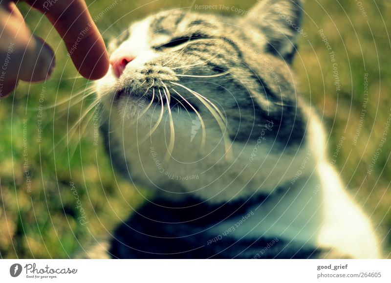 Cat Nature Hand Plant Animal Love Environment Landscape Meadow Emotions Moody Fingers Romance Warm-heartedness Pelt Touch