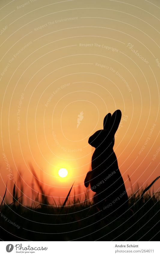 happy easter (no.1) Vacation & Travel Summer Sun Easter Environment Nature Cloudless sky Sunrise Sunset Sunlight Spring Beautiful weather Grass Bushes Animal