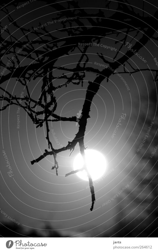O Environment Nature Plant Sky Sun Moon Full  moon Tree Creepy Bright Natural Adventure Fear Calm Black & white photo Exterior shot Deserted Copy Space top