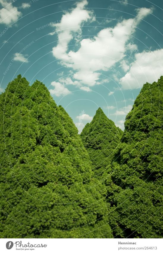 Sky Nature Blue Green Tree Summer Clouds Mountain Garden Park Weather Climate 3 Growth Bushes Corner