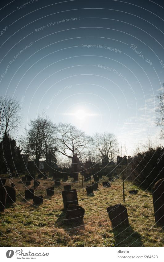 It's gonna be a sunny day! Sky Cloudless sky Sun Sunlight Weather Beautiful weather Grass Worms Deserted Cemetery Tourist Attraction Stone Old Authentic Creepy