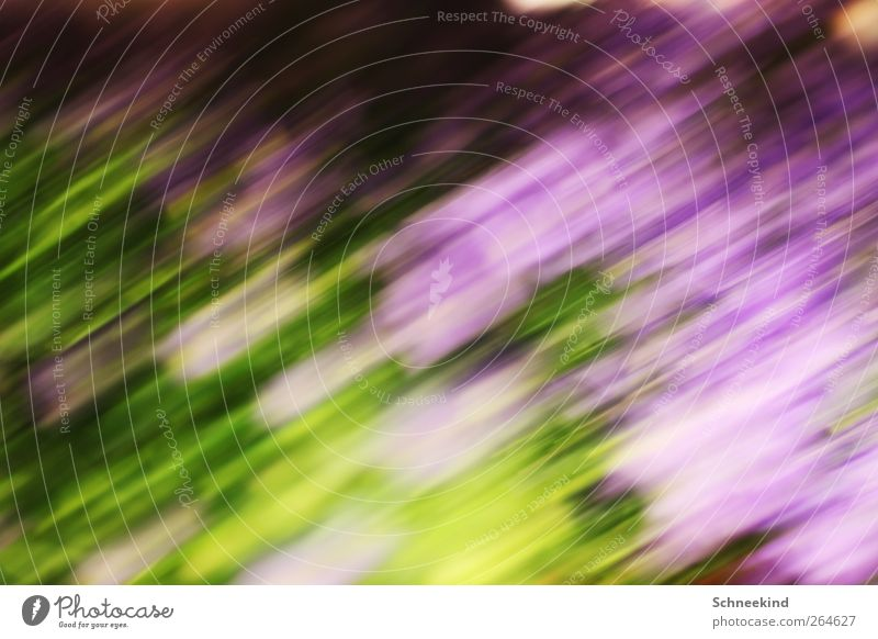 Nature Green Plant Flower Animal Environment Landscape Meadow Grass Spring Dream Art Walking Soft Putrefy Idyll
