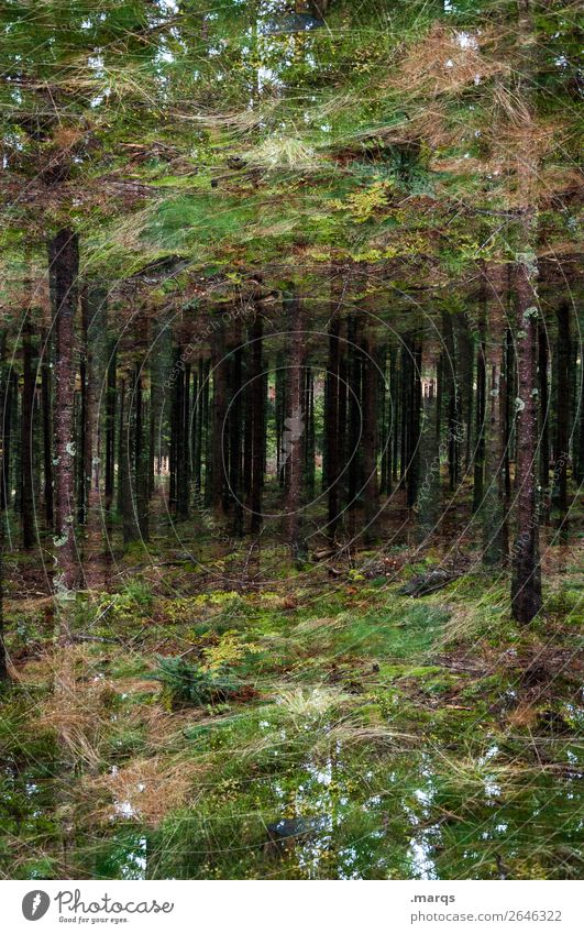 enchanted Environment Nature Tree Bushes Moss Forest Black Forest Surrealism Irritation Double exposure Jinxed Colour photo Exterior shot Abstract Deserted