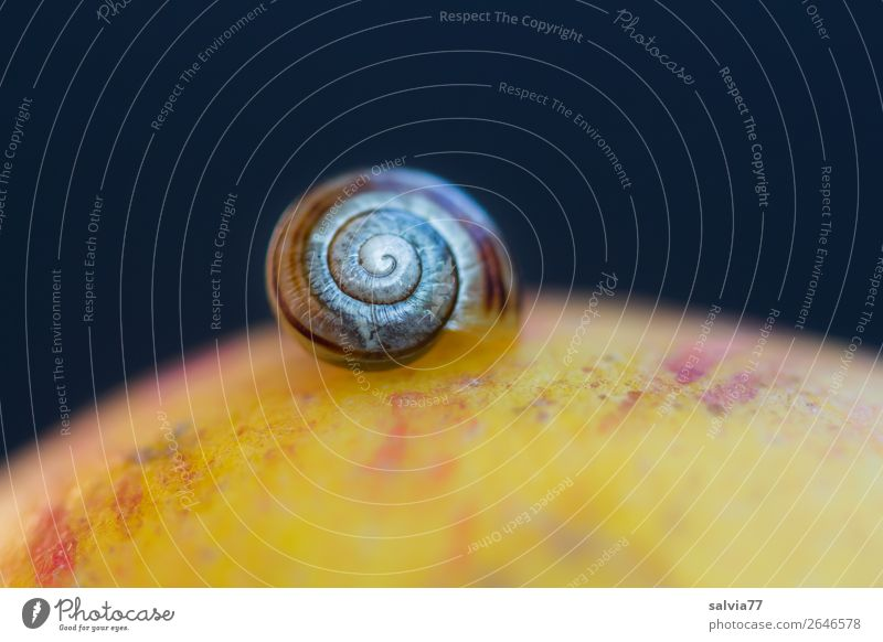 Nature Animal Calm Healthy Autumn Environment Time Above Fresh Break Round Protection Apple Snail Spiral