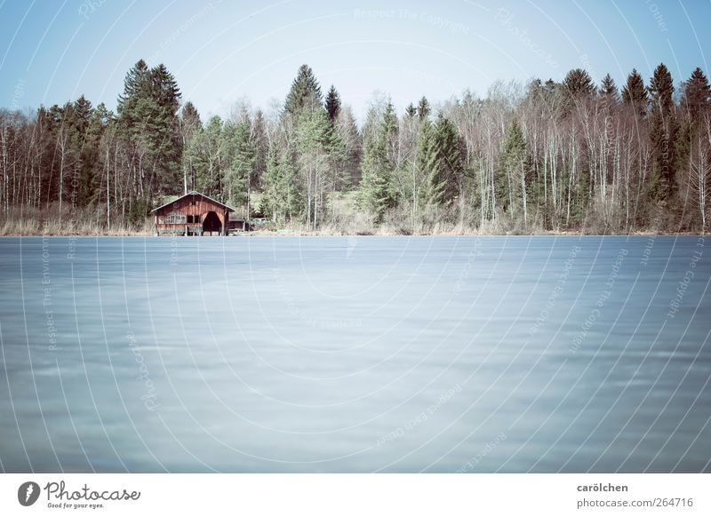 Nature Blue Green Winter Forest Environment Landscape Cold Gray Lake Brown Hut Allgäu Edge of the forest Frozen surface