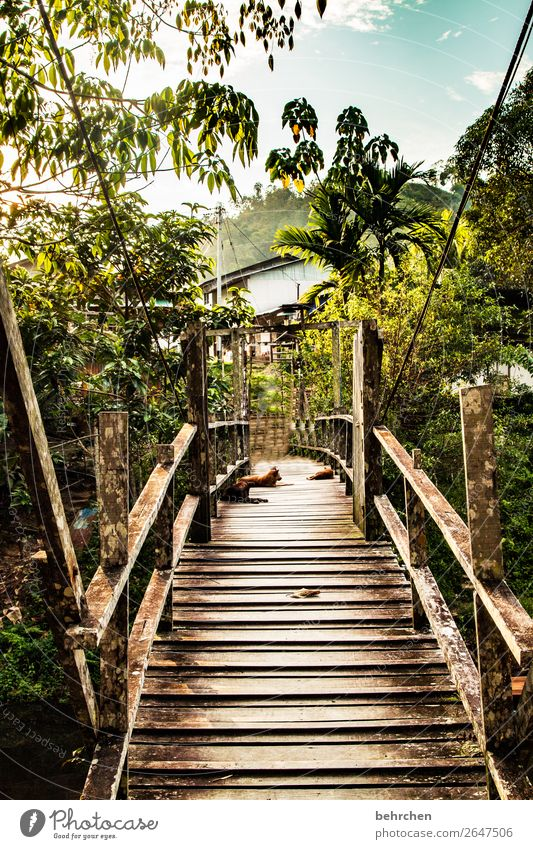 Favourite place | FERNWEH Vacation & Travel Tourism Trip Adventure Far-off places Freedom Nature Landscape Virgin forest Exceptional Exotic Fantastic Asia