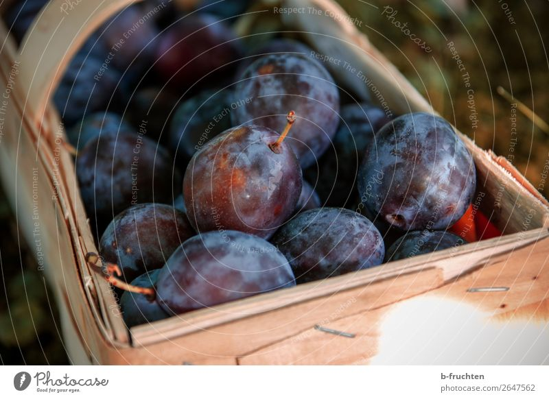 Damask plums Fruit Picnic Organic produce Vegetarian diet Healthy Eating Agriculture Forestry Box Work and employment Select Plum Stone fruit Harvest Garden