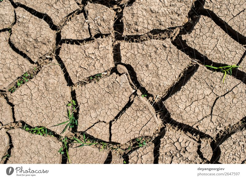 Cracked soil Summer Environment Nature Earth Climate Drought Poverty Hot Natural Death Disaster Crack & Rip & Tear dry land desert Ground background water Mud