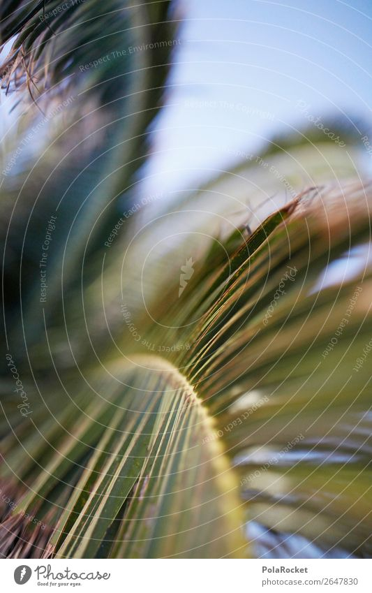 #AS# HolidayGreen Environment Nature Esthetic Summer Summer vacation Palm tree Palm frond Fuerteventura Summery Colour photo Subdued colour Exterior shot Detail