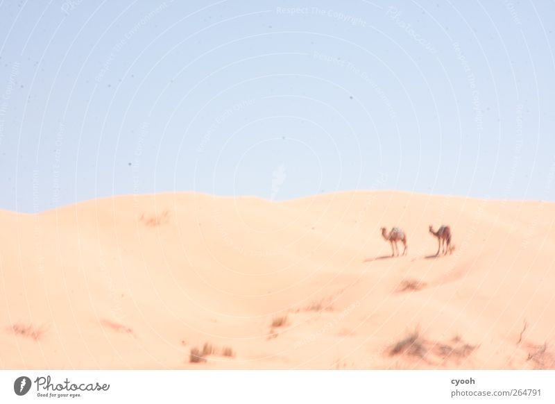 Fatamorgana Landscape Sand Air Sky Cloudless sky Horizon Sun Sunlight Summer Climate Weather Beautiful weather Warmth Drought Bushes Desert Stand To dry up