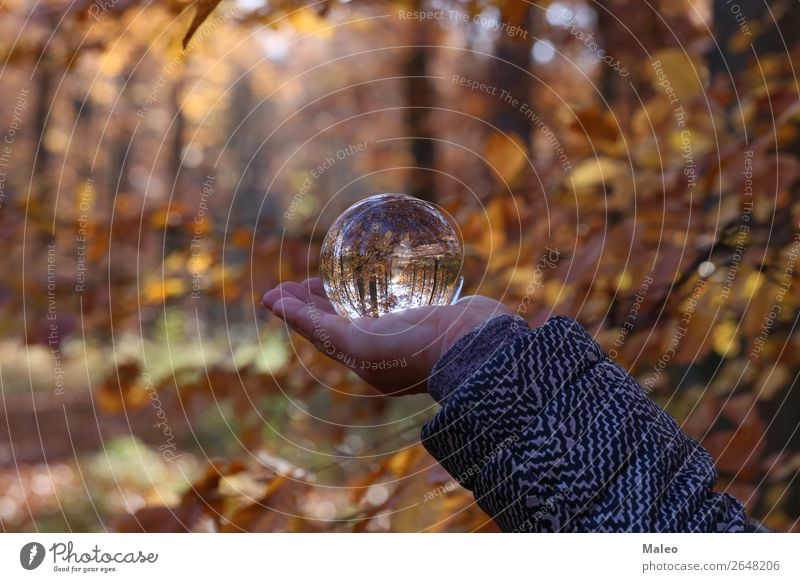 autumn Autumn Forest Landscape Nature Sphere Background picture Beautiful Vicinity Glass Glass ball Leaf Exterior shot Tree Autumn leaves Crystal Day Hand Plant