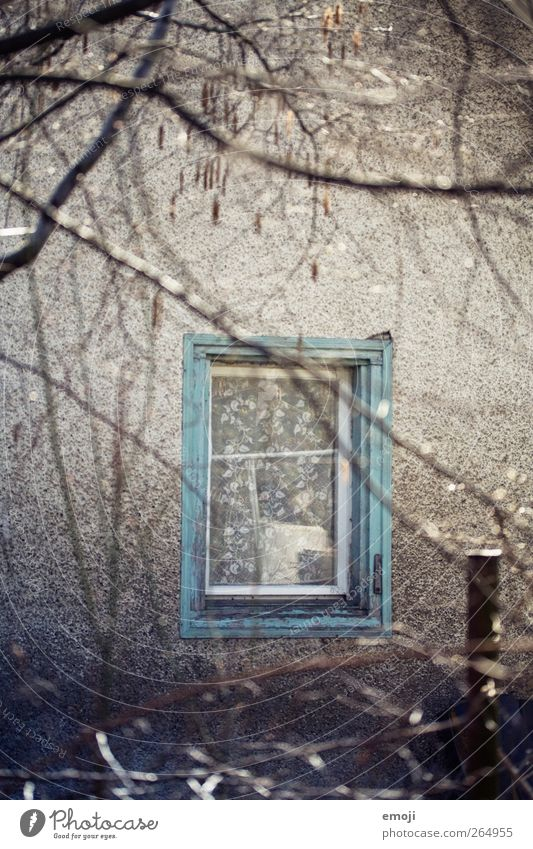 Old Window Wall (building) Wall (barrier) Facade Branch Turquoise Window pane Window frame