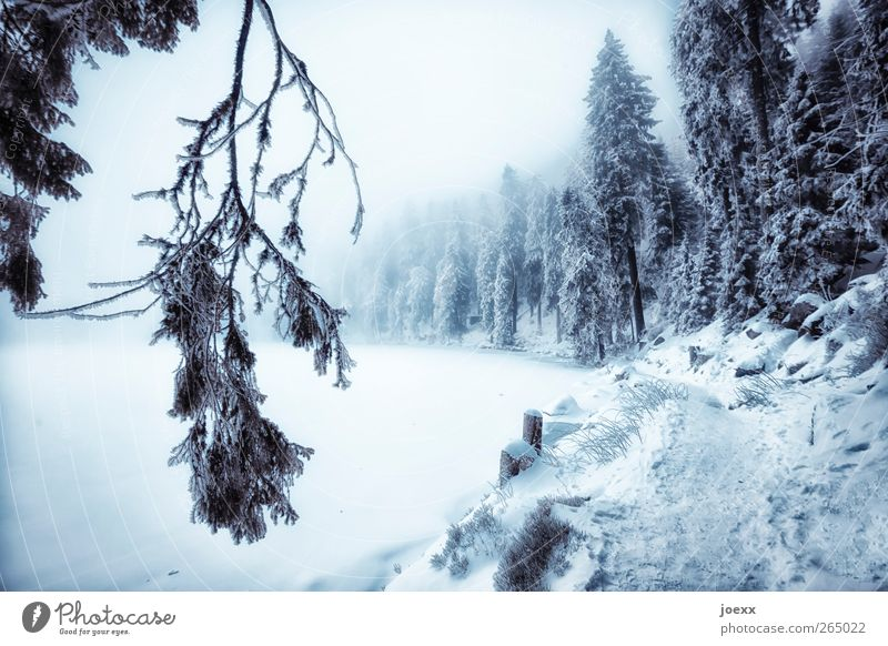 Nature Blue White Winter Black Forest Landscape Dark Cold Snow Lanes & trails Ice Fog Frost Idyll Lakeside