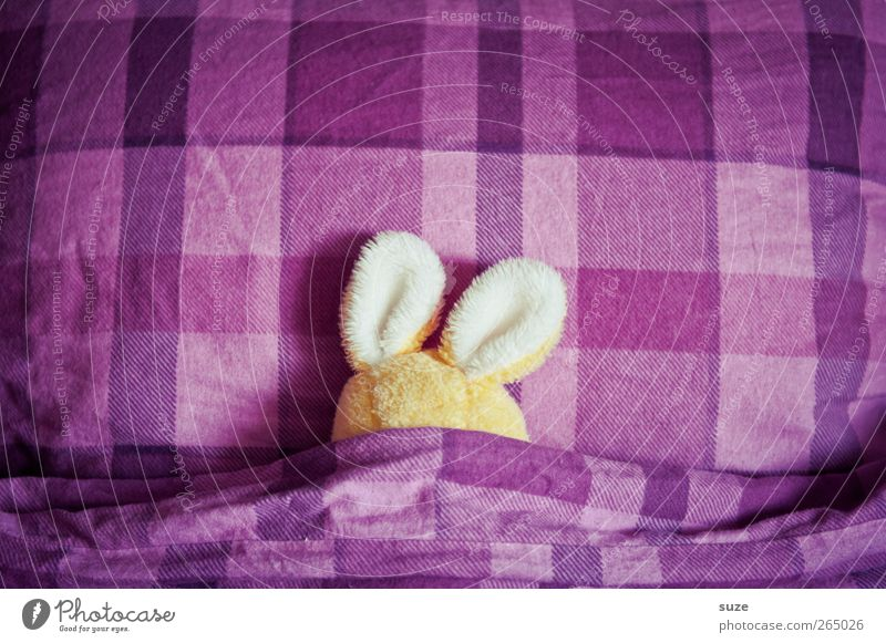 bedtime sweets Bed Easter Cuddly toy Sleep Small Funny Cute Yellow Violet Idea Creativity Easter Bunny Hare & Rabbit & Bunny Ear Bedclothes Cushion Oversleep