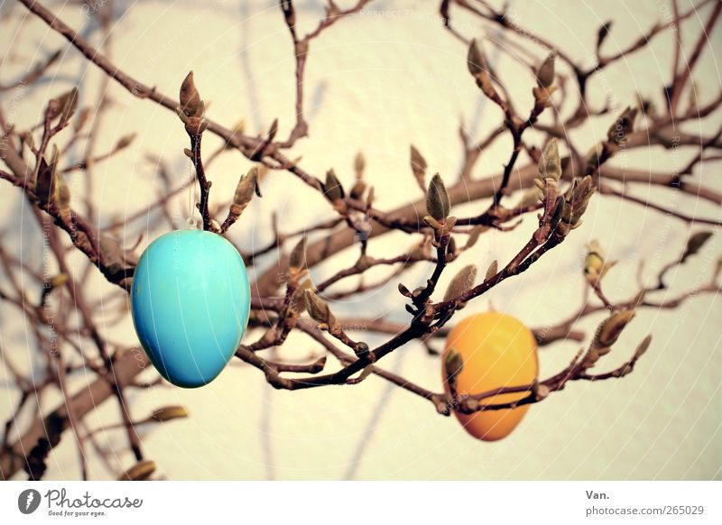 Easter in Magnolia Nature Spring Plant Tree Magnolia tree Twigs and branches Bud Warmth Blue Yellow Orange Easter egg Egg Plastic Public Holiday Colour photo