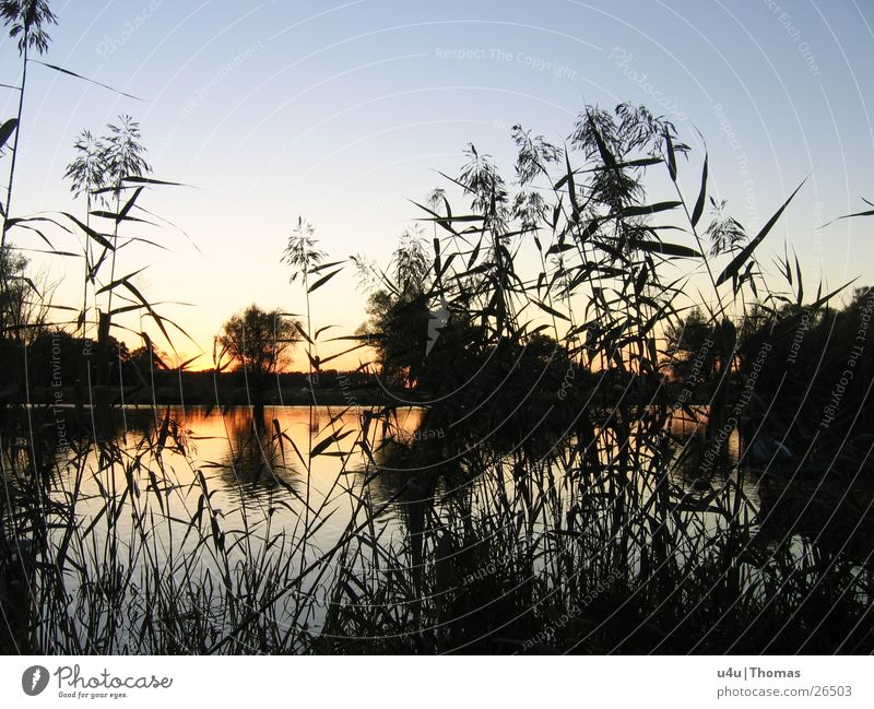 sunrise Lake Sunset Common Reed Horizon Water River Evening