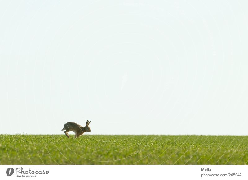 Nature Blue Green Animal Environment Landscape Meadow Freedom Movement Spring Field Wild animal Walking Natural Cute