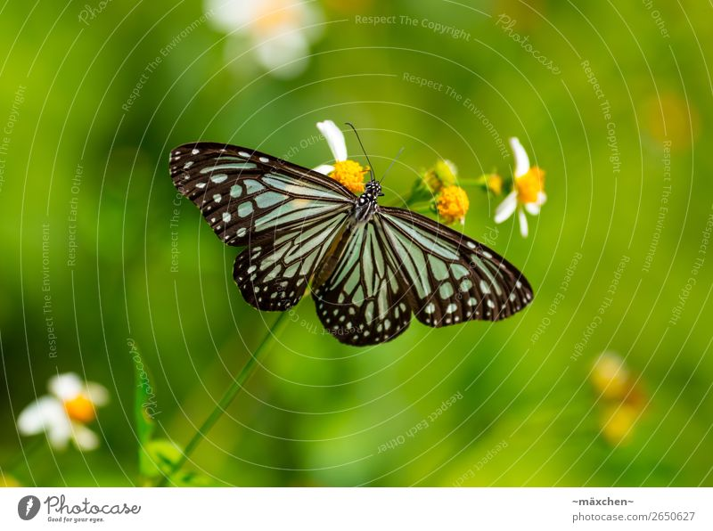 butterfly Nature Plant Animal Grass Blossom Foliage plant Butterfly Wing Beautiful Near Blue Green Black Turquoise Macro (Extreme close-up) Insect Pattern Point
