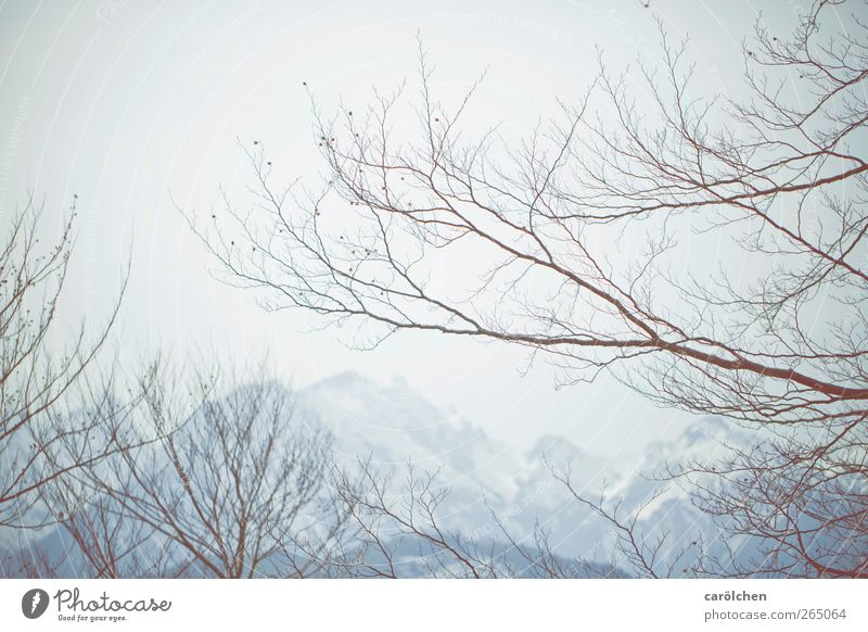 Nature Blue Winter Calm Environment Landscape Mountain Gray Fog Elegant Simple Alps Delicate Twig Leafless