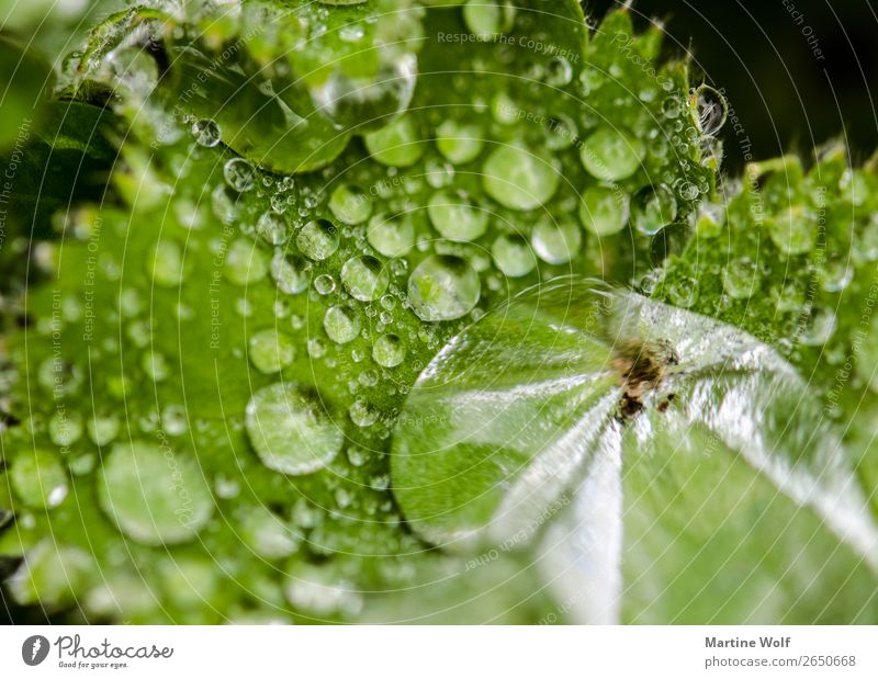 Nature Plant Green Water Leaf Environment Europe Drops of water Elements Scotland Foliage plant