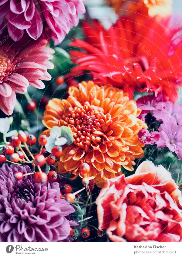 bouquet Plant Rose Leaf Blossom Dahlia Blossoming Illuminate Exotic Beautiful Positive Yellow Green Violet Orange Pink Red Bouquet Flower Gift Donate Joy Art