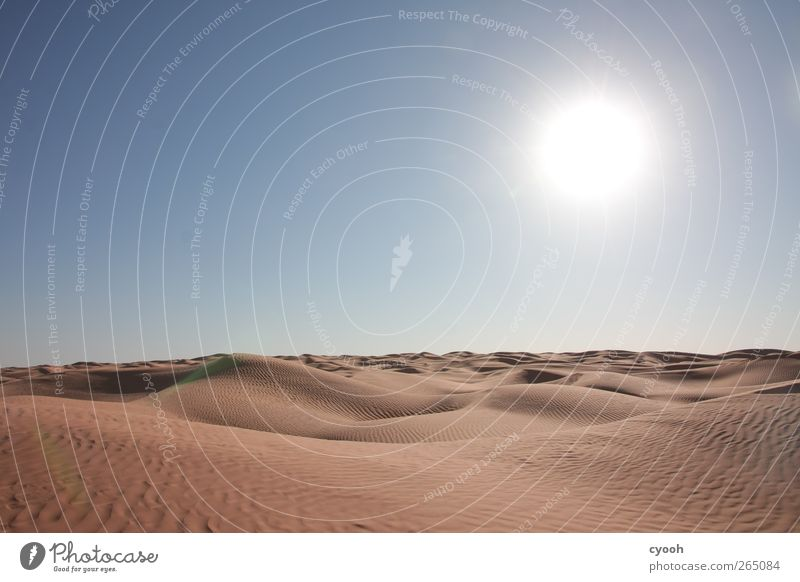 sea of sand Nature Landscape Sand Air Sky Cloudless sky Summer Climate Climate change Beautiful weather Warmth Drought Desert Far-off places Near Dry Blue