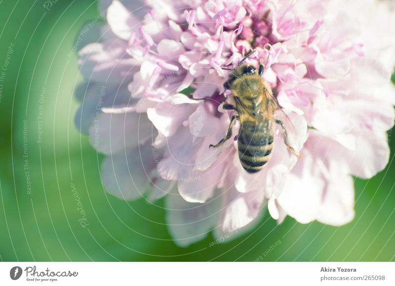 busy bee Nature Spring Summer Beautiful weather Flower Blossom Garden Animal Farm animal Bee 1 Work and employment Blossoming Natural Yellow Green Violet Pink