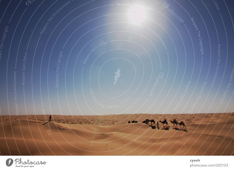 caravan Sand Cloudless sky Summer Climate Beautiful weather Warmth Drought Desert Movement Fight Walking Vacation & Travel Hiking Far-off places Free Together