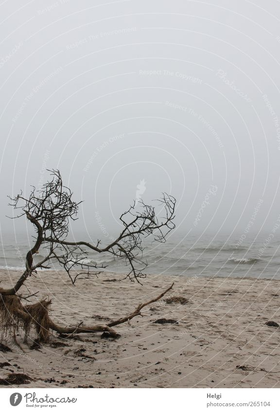 untouched nature... Environment Nature Landscape Plant Sand Water Weather Fog Tree Waves Coast Beach Baltic Sea Darss Western Beach Lie To dry up Authentic