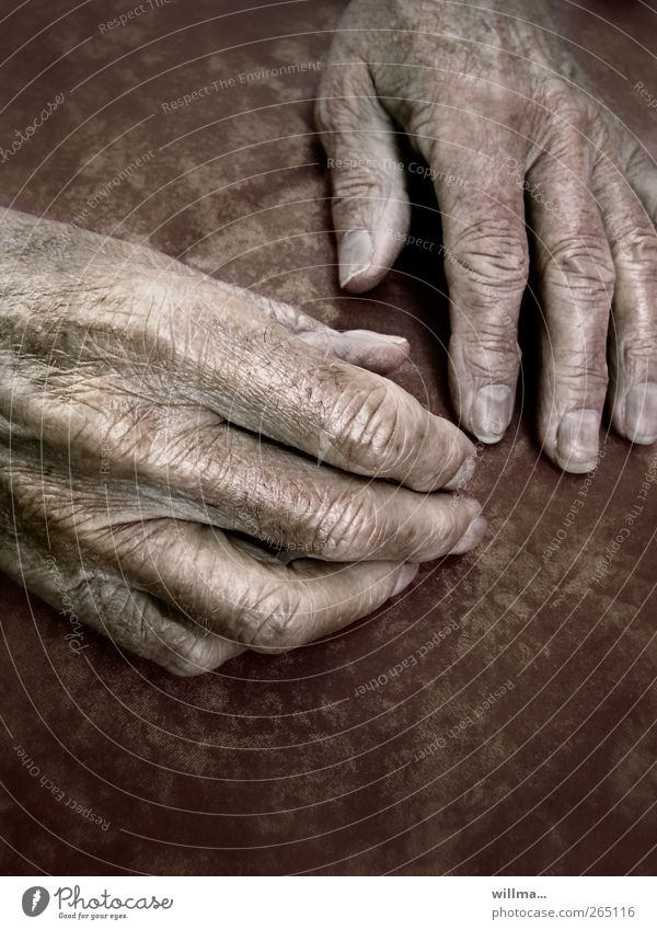 Old Hand Calm Relaxation Senior citizen Healthy Skin Fingers Transience Wrinkle 60 years and older Grandmother Grandfather Retirement Vintage Fingernail