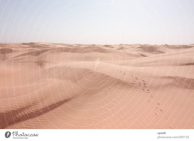 Follow the tracks... Nature Landscape Sand Sky Summer Climate Climate change Beautiful weather Warmth Drought Desert Walking Hiking Far-off places Bright Blue