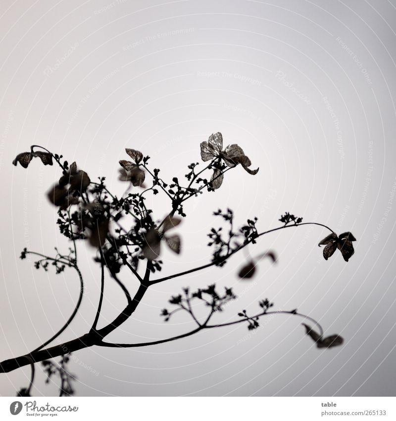 Sky Nature Old Plant Flower Winter Leaf Black Environment Dark Autumn Gray Blossom Brown Natural Esthetic
