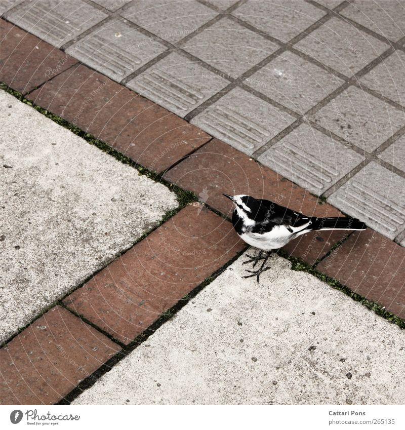 White Animal Black Stone Bird Wild animal Wild Stand Ground Gloomy Wing Feather Observe Near Colorless