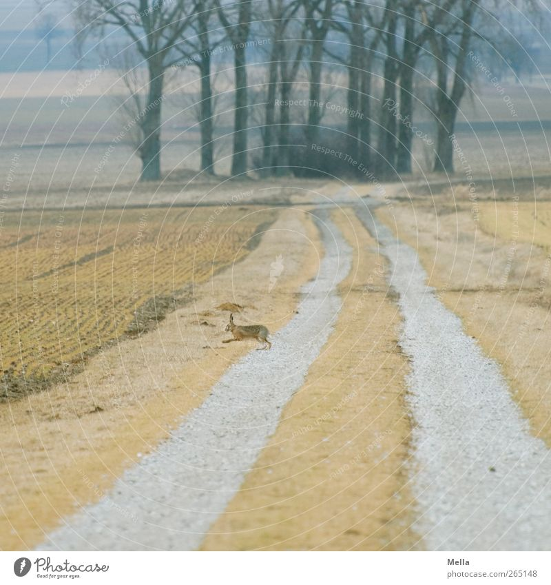 Nature Tree Animal Yellow Environment Landscape Freedom Lanes & trails Spring Small Brown Field Wild animal Walking Natural Free